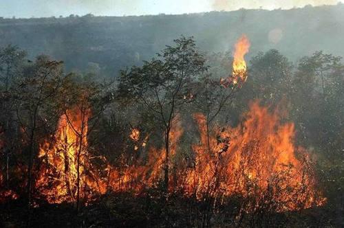 O fogo segue sendo monitorado por brigadistas voluntários e equipe da prefeitura local  FOTO: Divulgação