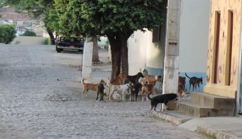 Matilhas de cães proliferam pelas ruas da cidade. Foto: Nildo Freitas/Brumado Verdade